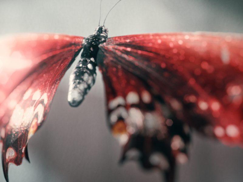 M.Butterfly